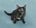 Red and black kitten standing on gray background Royalty Free Stock Image