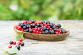 Red and blue black currant in garden Royalty Free Stock Photo