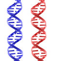 Red and blue glossy isolated DNA structures Royalty Free Stock Photo