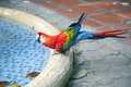 Red-blue Macaw (Ara Macao) Is ...