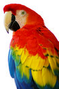 Red Blue Macaw Bird Stock Photo