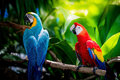 Red blue macaw macau family life Royalty Free Stock Photos