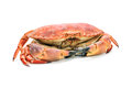Red boiled crab Royalty Free Stock Photos