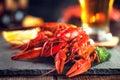 Red boiled crayfish on stone slate. Crawfish closeup Royalty Free Stock Photo