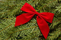 Red bow on evergreen Christmas tree background Royalty Free Stock Photo