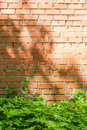 Red brick wall with patches of light from the sun and green grass at the foot of the wall Royalty Free Stock Photo