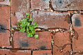 Red bricks texture with green grass Royalty Free Stock Photo