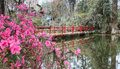 Red bridge with spring azaleas in south carolina water reflection and pink lowcountry garden Stock Photos