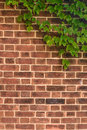Red brown brick wall with ivy on Royalty Free Stock Photography