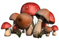 Red and brown mushrooms Royalty Free Stock Photo
