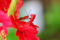 Red bug the behind a shoe flower Stock Images