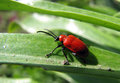 Red bug on a green leaf Stock Photography