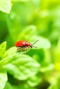 A red bug on springtime garden Royalty Free Stock Images