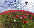 A red buttercups huge bright balloon flying over scenic hills blooming photo taken by lens fisheye Stock Images