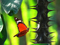 Red butterfly on thorn cactus Royalty Free Stock Photo