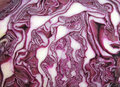 Red cabbage cut up head of purple Stock Photo