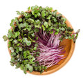 Red cabbage sprouts in wooden bowl over white Royalty Free Stock Photo