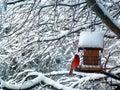 Red Cardinal Bird Snow Tree Royalty Free Stock Photo