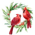 Red cardinal, Christmas wreath with birds on a white background, watercolor drawings Royalty Free Stock Photo