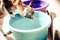 Red cat drinking water from an old bucket Royalty Free Stock Photo