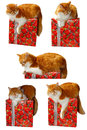 Red cat and gift box Stock Photo