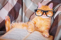 Red cat in glasses lying on sofa with book Royalty Free Stock Photo