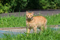 Red cat on the grass