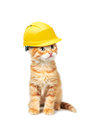 Red Cat With Helmet