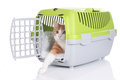 Red cat looking out of pet carrier isolated Stock Photos