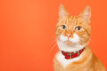 Red cat on orange background Royalty Free Stock Photo