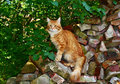 Red cat sitting on the bricks Royalty Free Stock Photography