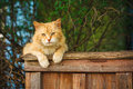 Red cat sitting on the fence a and looking at camera Stock Photography