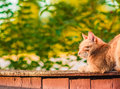 Red cat sitting on the fence and sleeping a Royalty Free Stock Photography
