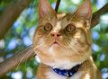 Red cat sitting in a tree Royalty Free Stock Photo