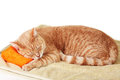 Red cat tabby sleeping isolated on white background Stock Images