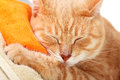 Red cat tabby sleeping isolated on white background Royalty Free Stock Photos