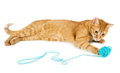 Red cat woth wool ball Royalty Free Stock Photo
