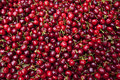 Red Cherries Royalty Free Stock Photo