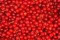 Red Cherries. Background.