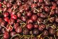 Red cherries ripe fresh background Stock Photos