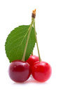 Red cherries on white ground Stock Photography
