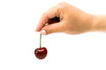 Red cherry in hand on white background Royalty Free Stock Photo