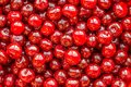 Red cherry. Royalty Free Stock Photo