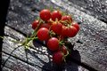 Red cherry tomato cluster Royalty Free Stock Photo