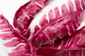 Red chicory Royalty Free Stock Photo