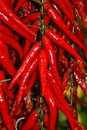 Red chili hot peppers vegetables fruit Stock Photography