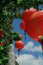 Red chinese lanterns on a perfect summer s day Stock Photography
