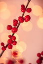 Red christmas berries winterberry branches with holly Royalty Free Stock Photo