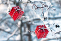 Red christmas gifts hanging on a tree in winter Royalty Free Stock Images