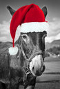 Red Christmas hat on a black and white donkey, fun greeting card Royalty Free Stock Photo